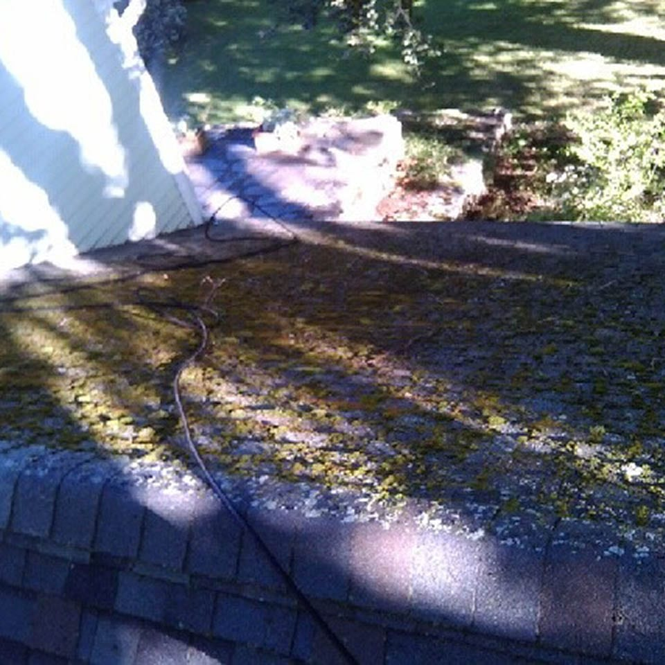 This Is A Before Photo Of A Roof Shampoo Job, The Roof Is Covered In Moss.